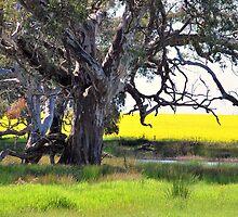 Thats Farming in Oz by Lozzar Landscape
