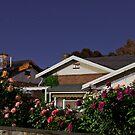 Spring Roses # 1 by sedge808