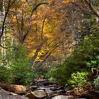 Smoky Mountain Color by photodug