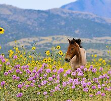 Foal and Flowers - 2 by Kellith
