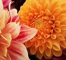 Flower macro - orange and pink by sideone