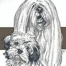 Lhasa Apso Father & Son by BarbBarcikKeith