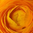 Orange Flower by kerryvarnum
