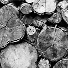 Logs by Catherine Breslin