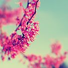Spring Fling by Libertad  Leal