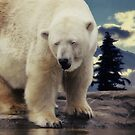 Polar Bear  by AD-DESIGN