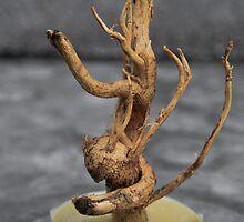 Amazing Roots-4 by Nefes-i Derya