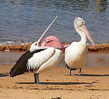"""""""Say Yes Darling"""" ~ Australian Pelican's Mating Display by Robert Elliott"""