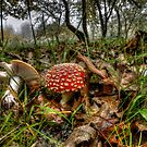 I Can't Hide ! Wild Mushrooms ~ by Charles & Patricia   Harkins ~ Picture Oregon