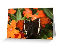Black and Brown Butterfly Greeting Card