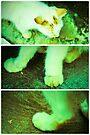 Lomo Spy Collage by tropicalsamuelv