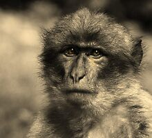 Primate Intensity by Jamie Candlin