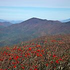 View from Craggy Dome Mountain by ValeriesGallery
