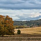 Petworth Park in autumn by Judi Lion