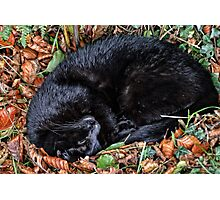 Guess who l found under the Hedgerows at Ferne Animal Sanctuary Photographic Print