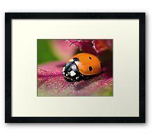 Ladybird - Ladybug - Marienkäfer - Glückskäfer II Framed Print
