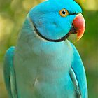 Blue Ringneck Parrot by peasticks