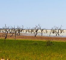 Menindee Lake  by hoboroad