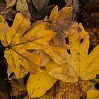 Leaf arrangement by Septi79
