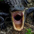 Even Alligators Yawn by Shari Galiardi