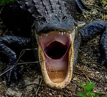 Even Alligators Yawn by Shari Galiardi