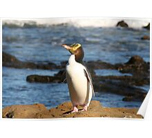 Yellow-eyed Penguin Poster