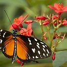 Tiger Longwing by TheaDaams