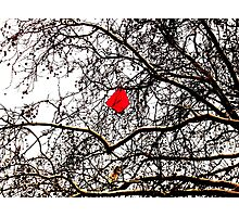 Deflated Red Balloon in a Tree Photographic Print