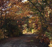 Autumn Road by SomeAverageJoe