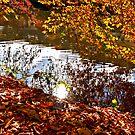 La Vesdre river in Chaudfontaine by 242Digital