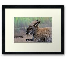 Wallaby with Flower Framed Print