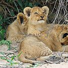 Cuddly cubs! by jozi1