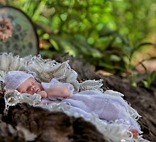 Asleep in the Garden  by Pene Stevens
