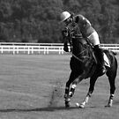 Polo - The Hit by Mark Bolton