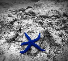 Blue Star by Adrian Alford Photography