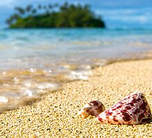 Shell Tide by Adrian Alford Photography