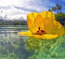 Lost In Paradise by Adrian Alford Photography