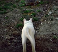 The cat and the tortoise by iamelmana