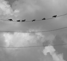 Birds on a wire by Emily Felty
