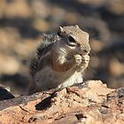 A Chipmunk Lunch by Jennifer Heseltine