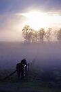 Quiet dawn by Penny Kittel