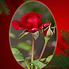 Merry Christmas - Red Roses by MotherNature
