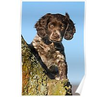 """I`m gorgerous"", German Spaniel puppy Poster"