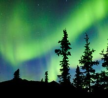 Northern Lights Aurora borealis over Yukon taiga spruce by ImagoBorealis