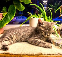 Cat Nap in the Garden of Windowsill by Mikell Herrick