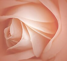 Misty Soft Peach Rose by edesigns14