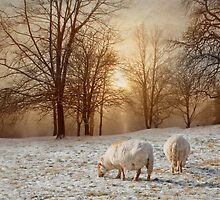 Winter fields by Lyn Evans