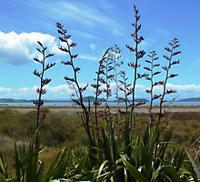 Flax (Phormium), native to New Zealand by Melissa Stevenson