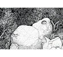 Sentry Rock or Indigenous Multi-tasking Photographic Print