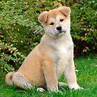 Akita puppy by Katho Menden